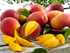South Florida Mangos - Get Well
